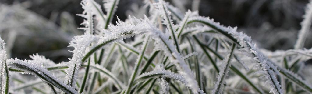 hiver jardin gèle herbe