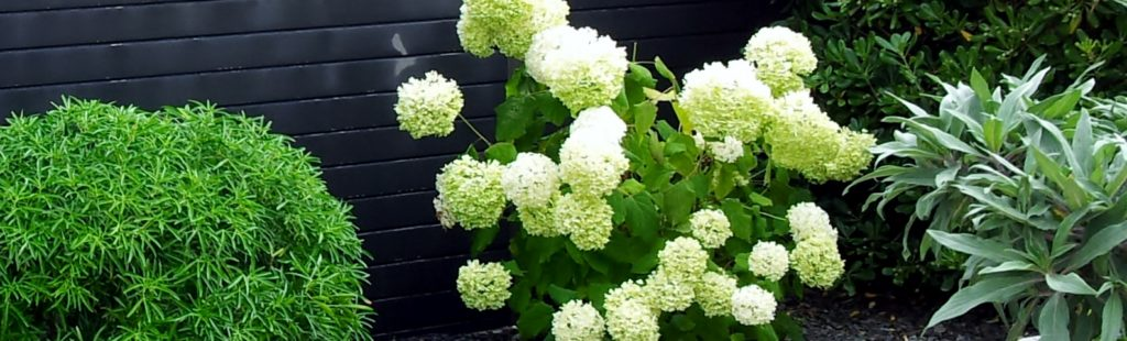 jardin vegetal entretien fleur blanche carradori