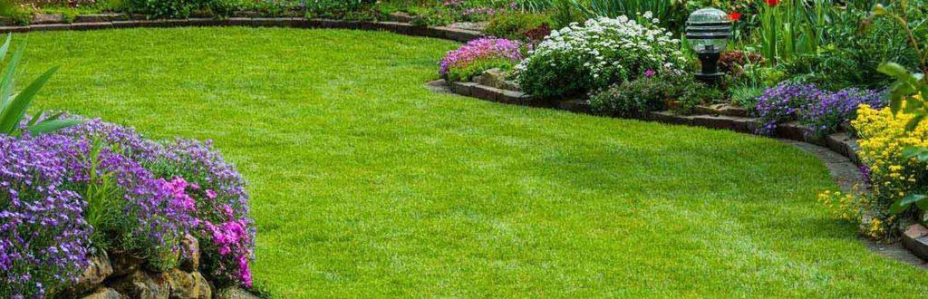 pelouse verte jardin
